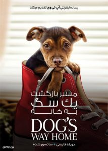 دانلود فیلم A Dogs Way Home 2019 مسیر بازگشت یک سگ به خانه با دوبله فارسی